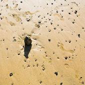 Boulder on sandy beach — Stockfoto