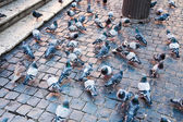 Urban pigeons — Stock Photo