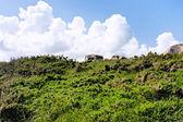 Moorlandschaften in hanglage — Stockfoto