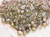 Ground spicy coriander seeds — Stock Photo