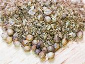 Coriandolo macinato e semi di coriandolo secchi — Foto Stock