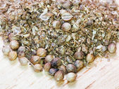 Milled coriander and dried coriander seeds — Stock Photo