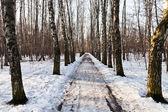 Snowy alley in birch forest — Stock Photo