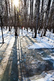 Morning in early spring forest — Stockfoto