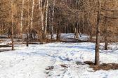 在春季森林景区的早上 — 图库照片