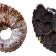 Two sides of Fossil ammonite shell — ストック写真