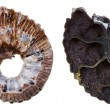 Stock Photo: Two sides of Fossil ammonite shell