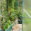 Greenhouse in garden — Stock Photo