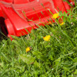 Green grass and red lawn mower — Foto Stock