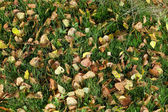 Herbst birkenblätter im grünen gras — Stockfoto