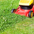Lawn mower mows green lawn — Stock Photo