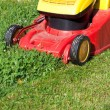 Stock Photo: Mowing green lawn