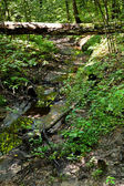 Bridge from birch trunk over brook — Stock Photo