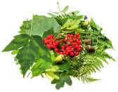 Green leaves, red seeds and acorns — Stock Photo