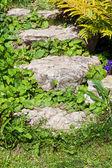 шаги, заросший травой — Стоковое фото