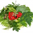 Green leaves, red rowan berries and acorns — Stock Photo #30455803