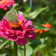 Stock Photo: Butterfly on pink flower