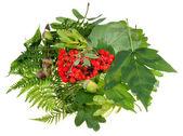 Green leaves, red rowan berries and acorns — Stock Photo