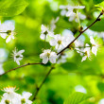 White spring flowers on tree brunch — Stock Photo #30969747