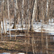 Snow melting in birch forest — Stock Photo