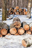 Stacks of firewoods in spring forest — Stock Photo