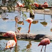 Wading bird - flamingo — Stock Photo
