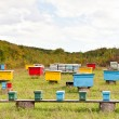 Multicolored wooden beehives at apiary — Stock Photo