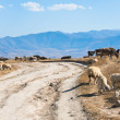 Panorama with country road and flock of sheep — Stock Photo