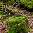 Moss-grown boulders in caucasus mountains — Stock Photo