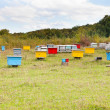 Multicolored wooden beehives at apiary — Foto de Stock
