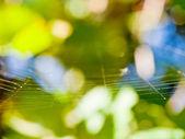 Sunlit thin gossamer — Stock Photo