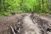 Mountain narrow road — Стоковое фото