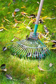 Cleaning green lawn from dead leaves — Stock Photo