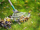 Cleaning green lawn from leaf litter — Stock Photo