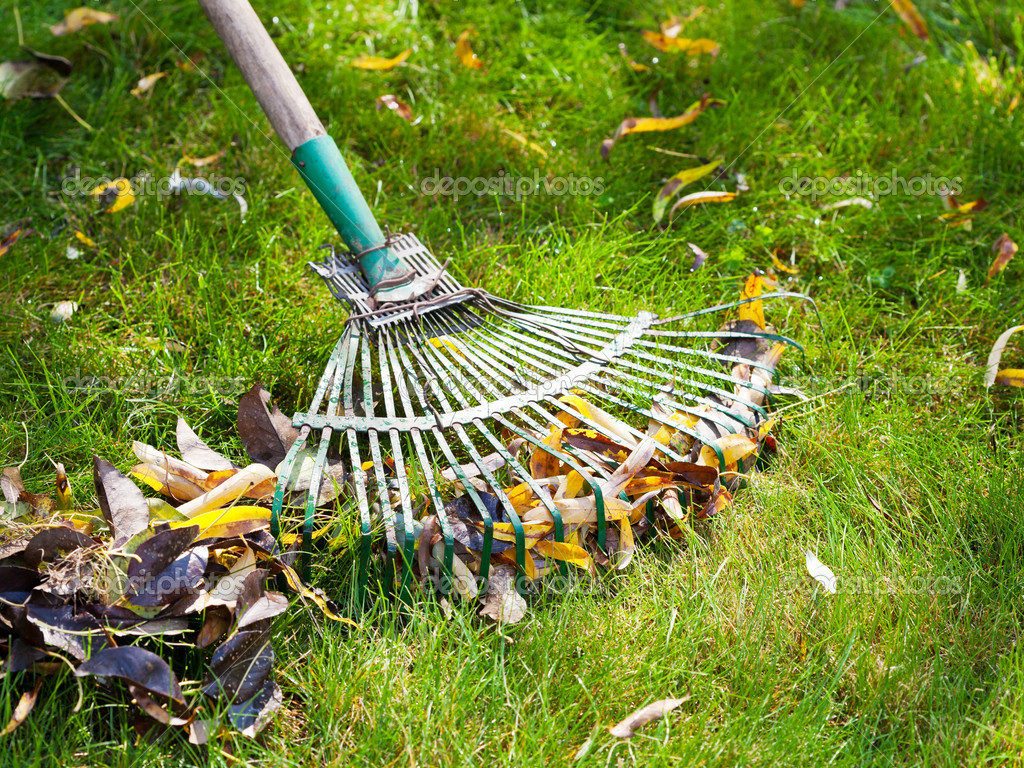 Cleaning green lawn from leaf litter — Stock Photo © vvoennyy ...