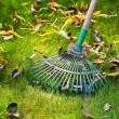Cleaning green lawn by rake — Stok fotoğraf