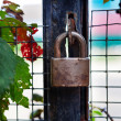 Locked padlock on gate — Stock Photo