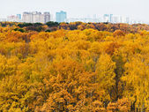 Autumn forest and urban building on horizon — Foto de Stock