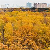 Autumn park and urban houses — Stock Photo