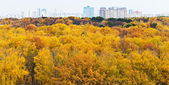 Cityscape view with autumn urban park — Stok fotoğraf