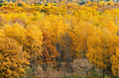 Edge of autumn forest — Stockfoto