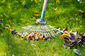 Cleaning green lawn from fallen leaves — Stock Photo