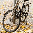 Stock Photo: Bicycle parked on street
