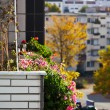 Bed of flowers on the balcony of urban house — Stock Photo #34343011