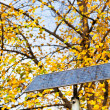 Outdoor solar battery panel and tree — Stock Photo
