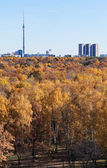 View of TV tower and autumn forest — Stock Photo