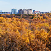 Urban buildings on autumn forest edge — Stock Photo