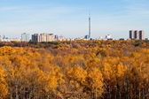 Autumn skyline TV tower and yellow trees — Stock Photo
