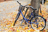 Bicycle parked on street with autumn leaves in Berlin — ストック写真