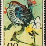 Постер, плакат: Young cuckoo